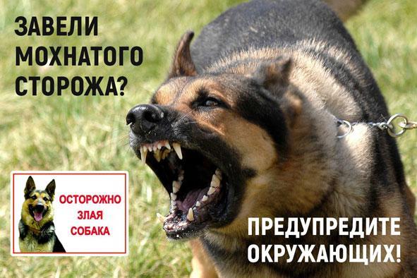 Табличка сторожно злые собаки